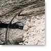 Kalcijum-sulfid